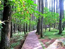Sketsa Gambar Hutan Lindung Garlerisket