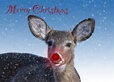 rudolph merry christmas card photograph by shara