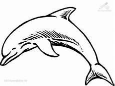 Malvorlagen Delfin J 9 Besten Delfin Bilder Auf Delphine Fische