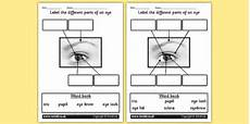 ks1 science senses sight differentiated worksheets high ability