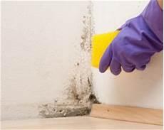 schimmel aus stoff entfernen stockflecken entfernen tipps und hausmittel