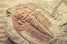 types of fossils science struck