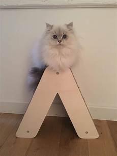 201 pingl 233 par homycat sur alphabet griffoir pour chat
