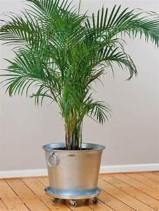 Zimmerpflanzen Im Winter Richtig Pflegen Das Manufactum