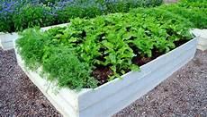 hochbeet richtig bepflanzen hochbeet bepflanzen richtig bef 252 llen und passende