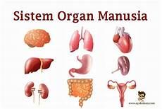 Pengertian Sistem Organ Manusia Jenis Macam Ciri Fungsi