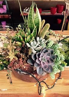 composizioni vasi composizioni di piante grasse in vasi di vetro kq01