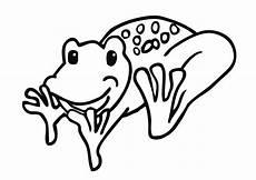Frosch Ausmalbild Erwachsene Frosch Ausmalbild Kostenlose Ausmalbilder Kostenlos