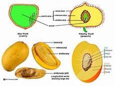 Gambar Buah Apel Dan Bagiannya Koleksi Gambar Hd