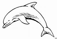 Window Color Malvorlagen Delphine Laechelnder Delphin Springt Ausmalbild Malvorlage Tiere
