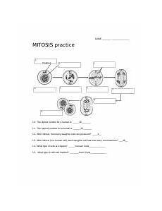 meiosis pictures worksheet answers xnpxwb on each of the
