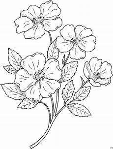 Gratis Malvorlagen Blumen Eine Blume Vier Blueten Ausmalbild Malvorlage Blumen
