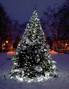 Weihnachtsbaum Led Beleuchtung - led outdoor tree lights will give a remarkable look to