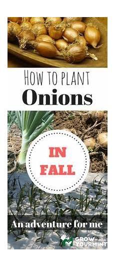 sanierungs check investitionen lohnen sich fuer zu lernen wie im herbst zwiebeln pflanzt kann sich