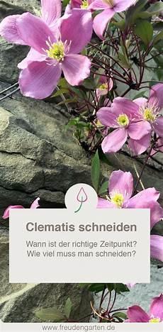 Clematis Schneiden Gartentipps Clematis Schneiden