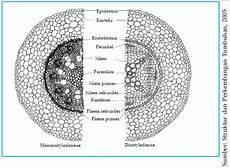 Struktur Akar Tanaman Siswapedia