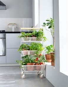 potager appartement jardiner en appartement potager int 233 rieur et faire