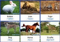 Nama Nama Hewan Dalam Bahasa Inggris Bergambar Materi