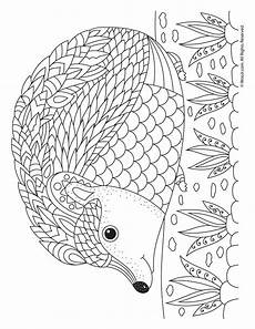 hedgehog coloring page free coloring pages