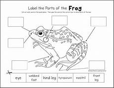 frog life cycle worksheets by s learning corner tpt