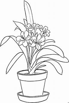 Ausmalbilder Blumen Im Topf Blumentopf Mit Grosser Blume Ausmalbild Malvorlage Blumen