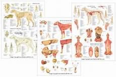 dog canine acupuncture chart