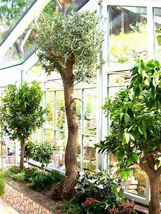 pflanzen für wintergarten wintergarten wintergartenbepflanzung wintergarten pflanzen