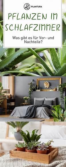 F 252 R Schlafzimmer Geeignete Pflanzen Wohndesign