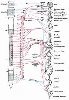 vasi addominali il blocco dei nervi splancnici per il trattamento dello