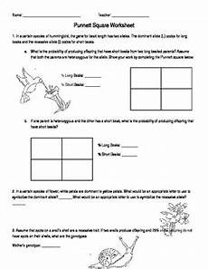 punnett square worksheet by behen teachers pay