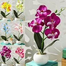 Kunst Orchidee Im Topf - k 252 nstliche orchidee im topf kunst blumen orchideen