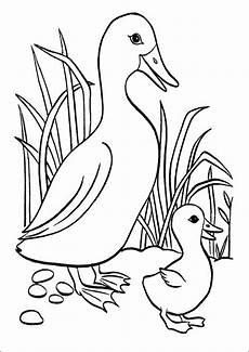 Lustige Enten Ausmalbilder Ausmalbilder Enten 13 Ausmalbilder Tiere