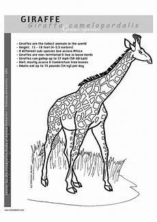 ausmalbilder drucken giraffe kinder zeichnen und ausmalen