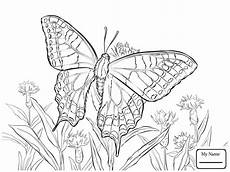 butterfly coloring pages for 100 images print for free