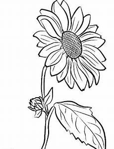 Gambar Bunga Matahari Hitam Putih Harian Nusantara