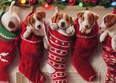 puppies hanging in christmas 10 cards 12