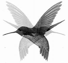 Gif Animation Gerak Burung 10 187 Gif Images