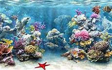 coral reef research papers the characteristics of this marine life