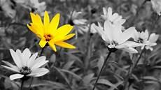 fiori in bianco e nero into the reflex comporre con luce e colore