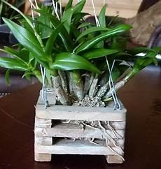 vasi in legno fai da te vasi per orchidee orchidee orchidee in vaso