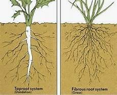 Pendidikan Biologi Pengantar Morfologi Tumbuhan