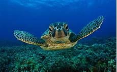 die schönsten aquarium fische süßwasser die 55 besten natur unter wasser hintergrundbilder