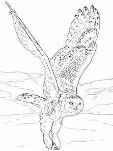 Eule Hedwig Malvorlage Malvorlagen Eule Kostenlos