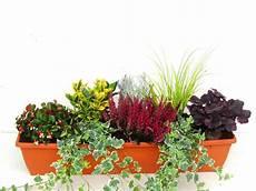 pflanzen set f 252 r balkonbepflanzung 80 cm pflanzen