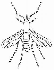 Insekten Malvorlagen Tiere Insekten Malvorlagen Malvorlagen Zeichenvorlagen
