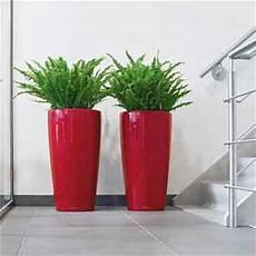 lechuza rondo planters tapered classico plant