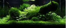 amano aquascape legendary aquarist takashi amano aquarium architecture