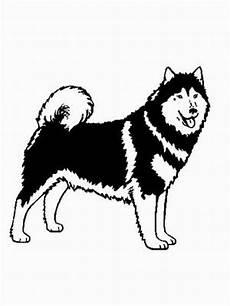 malvorlagen hunde gratis hund alaskan malamute ausmalbild malvorlage hunde