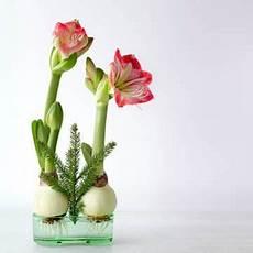 fiori bulbo bulbi da fiore in vaso messa a dimora e tempi di fioritura