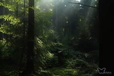 im elfenwald weitblickpoesie